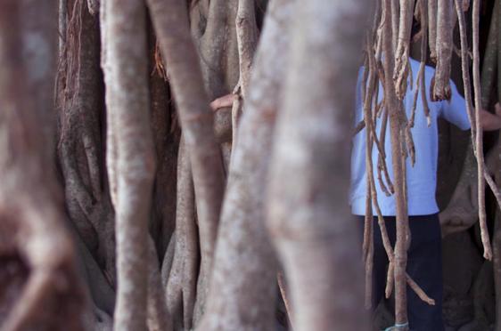 praticare qi gong con alberi - baniano