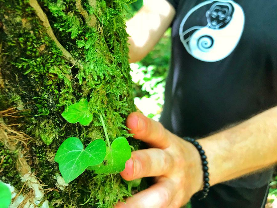 qi gong con alberi - Sorriso Interiore