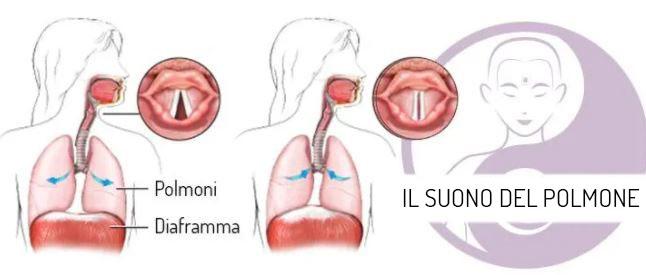 il suono del polmone