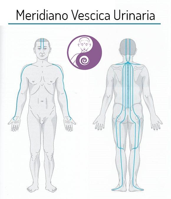 meridiano vescica urinaria